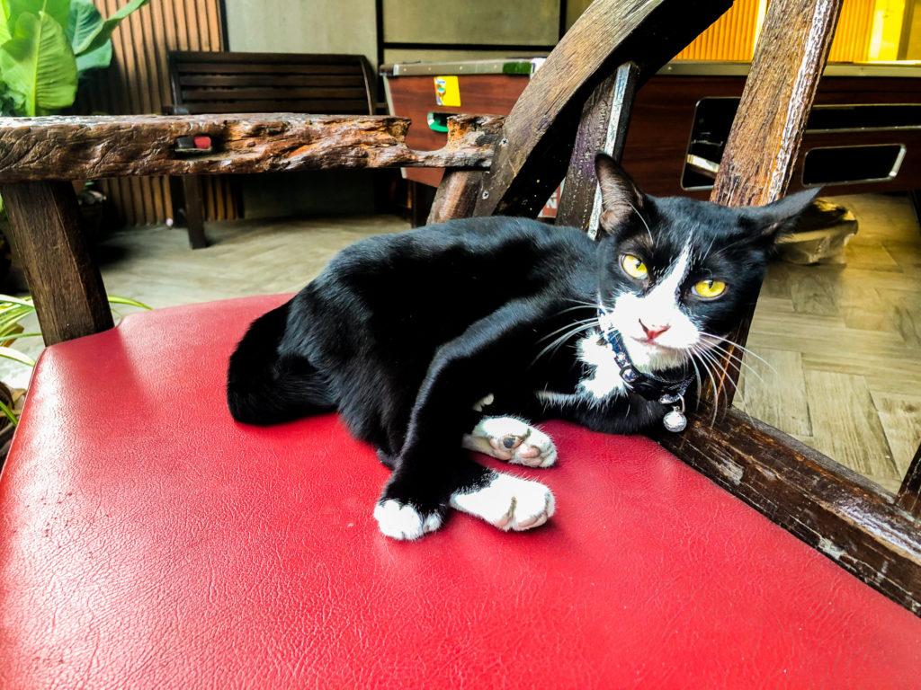 バンコクの路地裏のバーにいた猫。