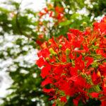 ワット・パイロンウア(地獄寺)に咲いていた赤い花。