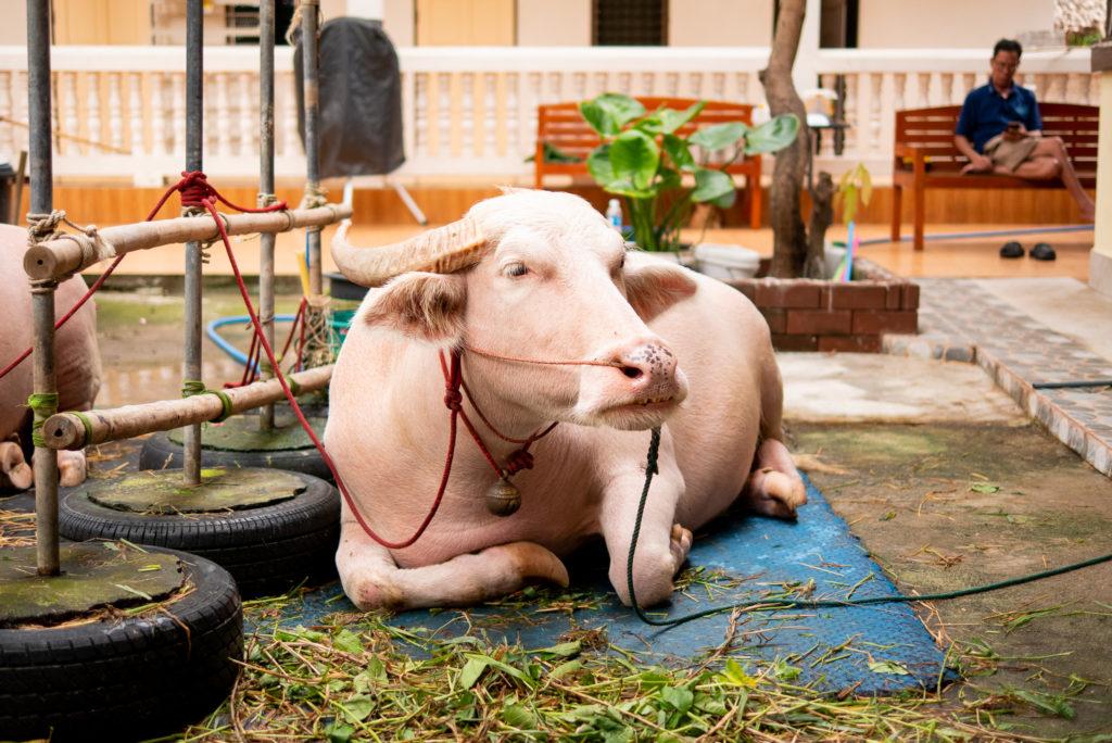やはり牛です。